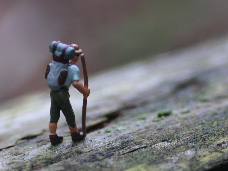 Wanderer_2